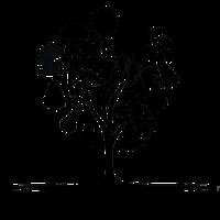 Transition Creswick Logo
