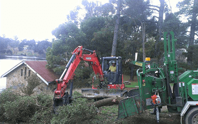 Tree Removal and Maintenance